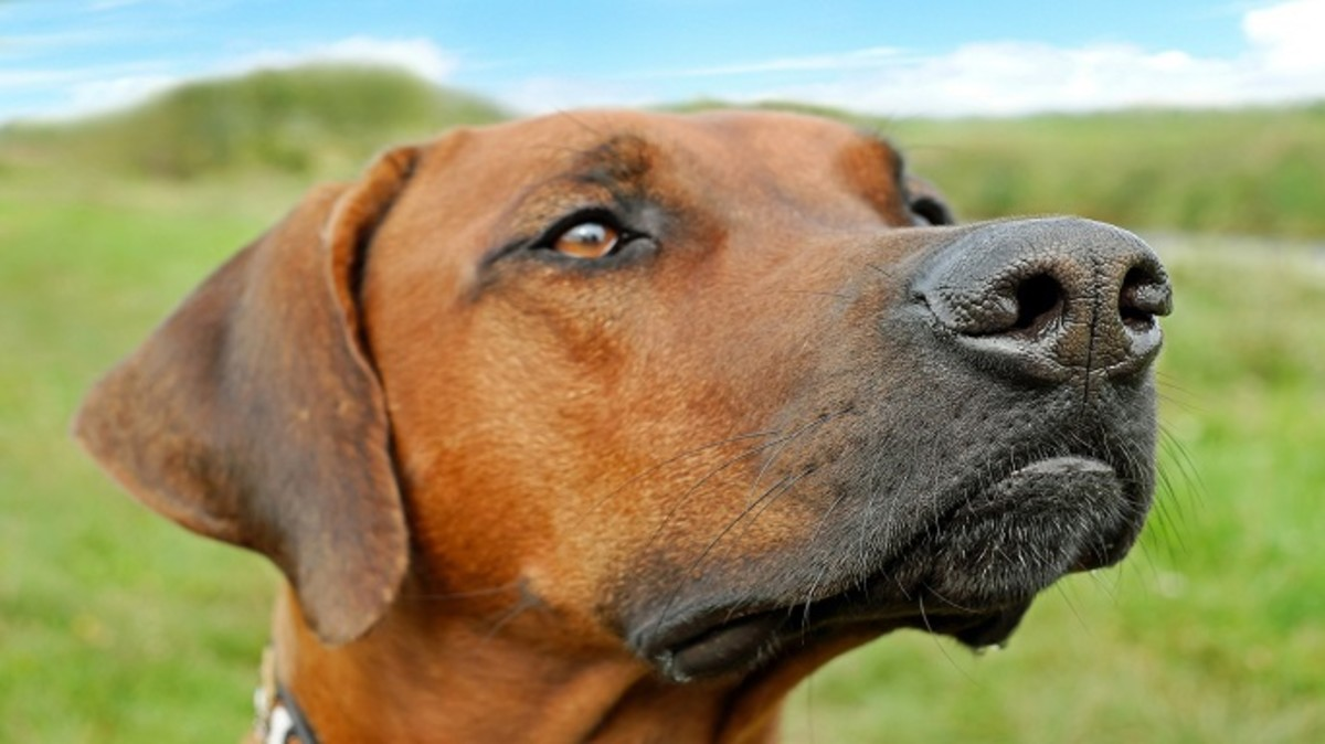 Why Do Dogs Have Whiskers Under The Chin