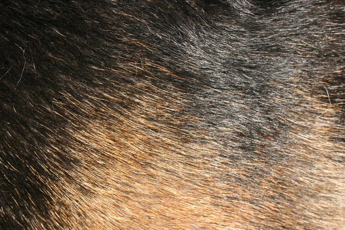 Why Do Some Dogs Have Hair and Not Fur? - Why Do Dogs?