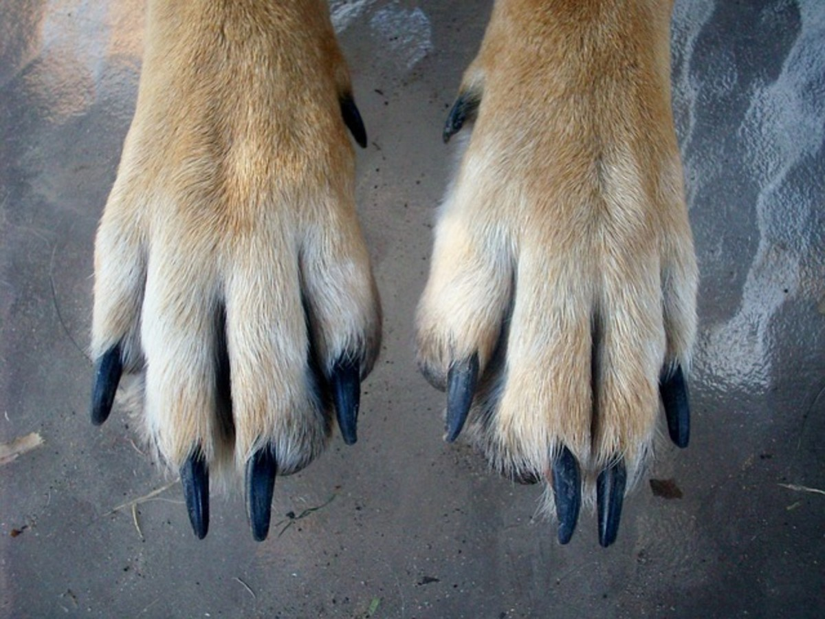 paws-459713_640