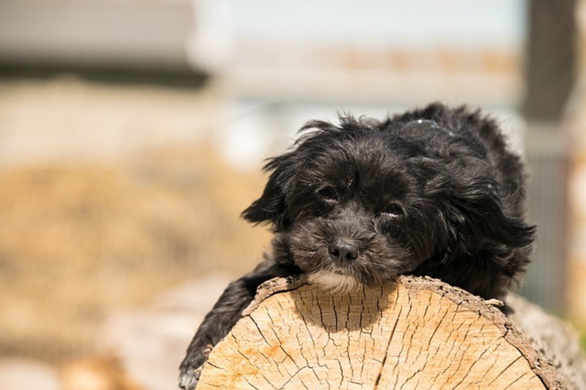 Dogs are attracted to the smell and texture of wood
