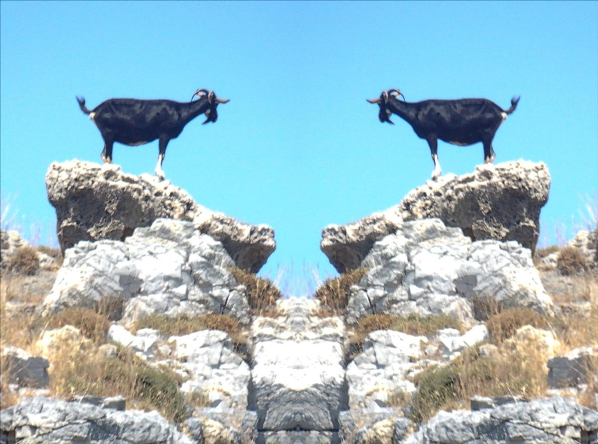 Avoid the goat on a rock stance...