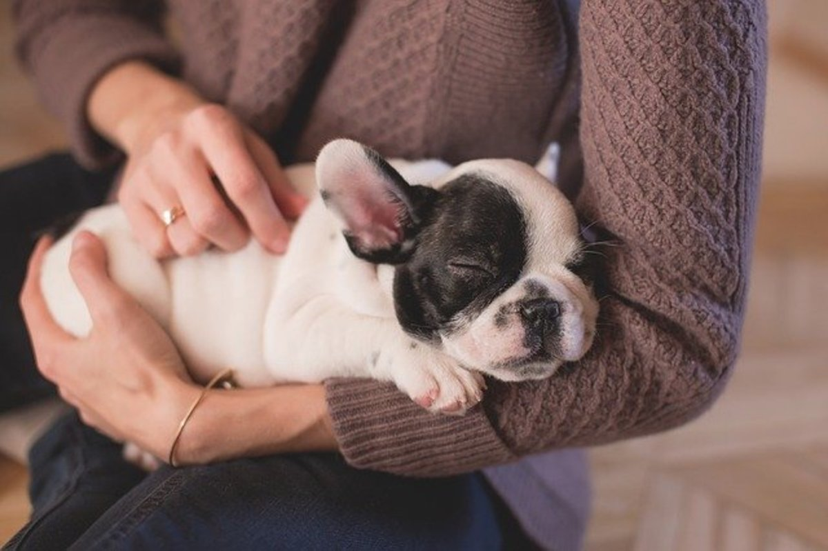 Your lap is warm, comforting and makes your dog feel secure