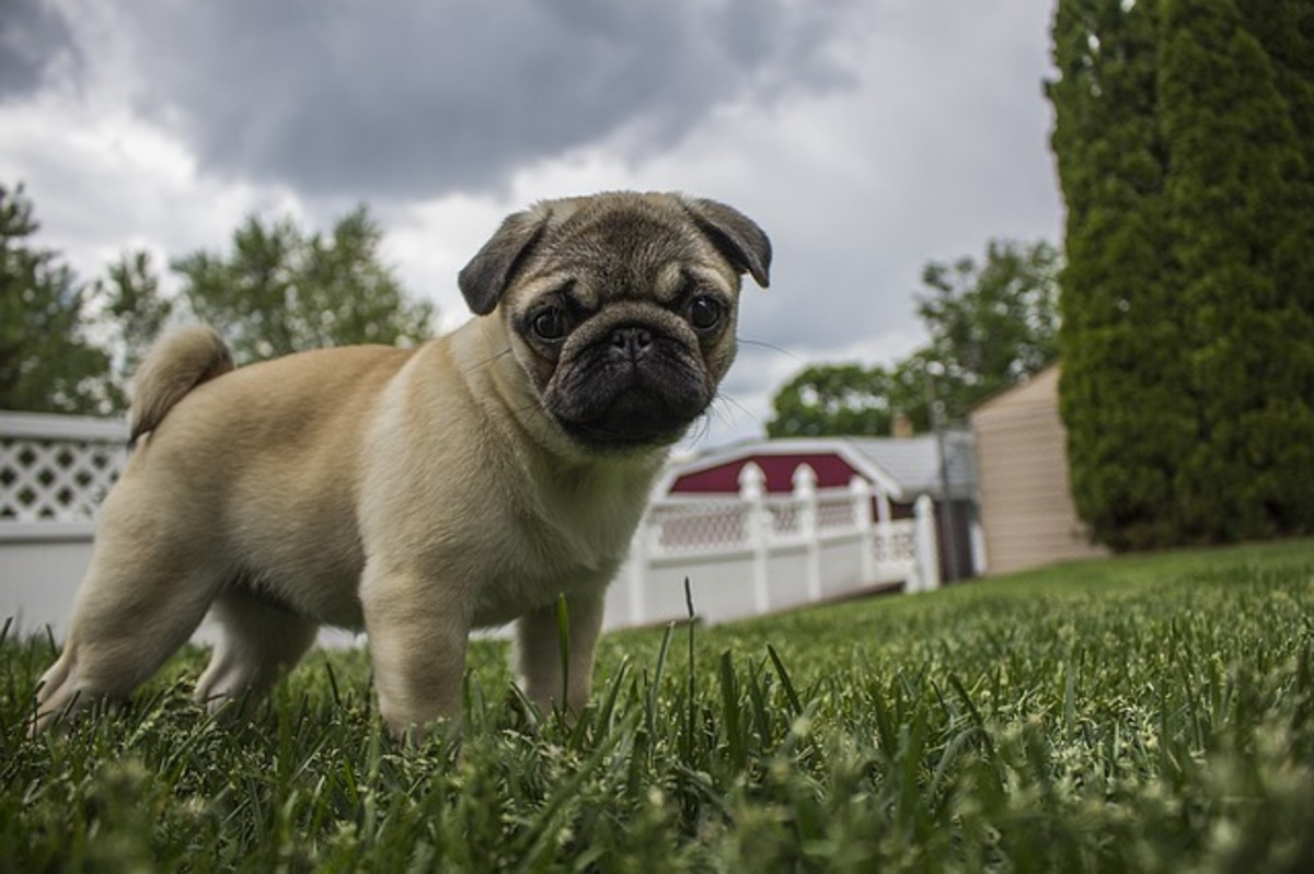 Dogs may associate cloud covers with thunderstorms