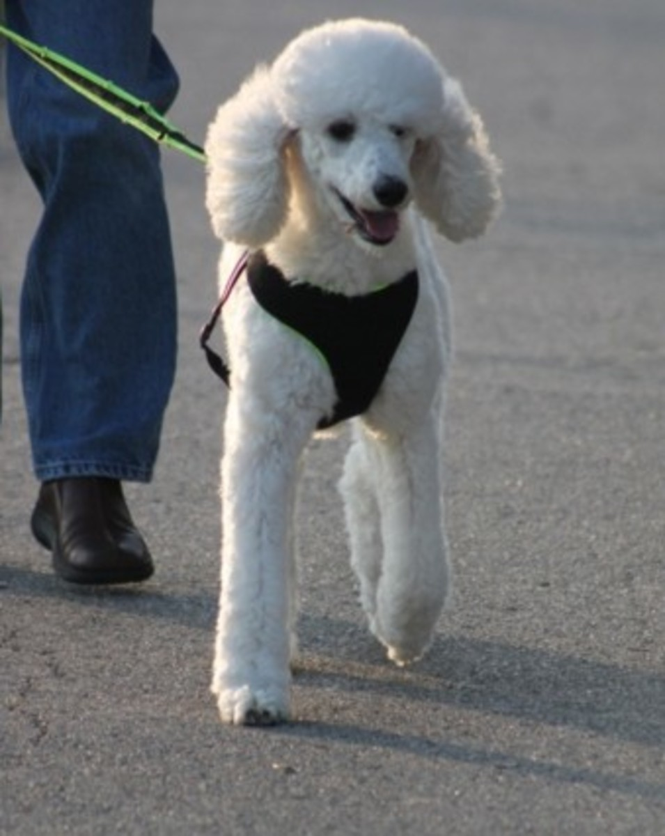 Going on a walk may keep doggy hiccups at bay.
