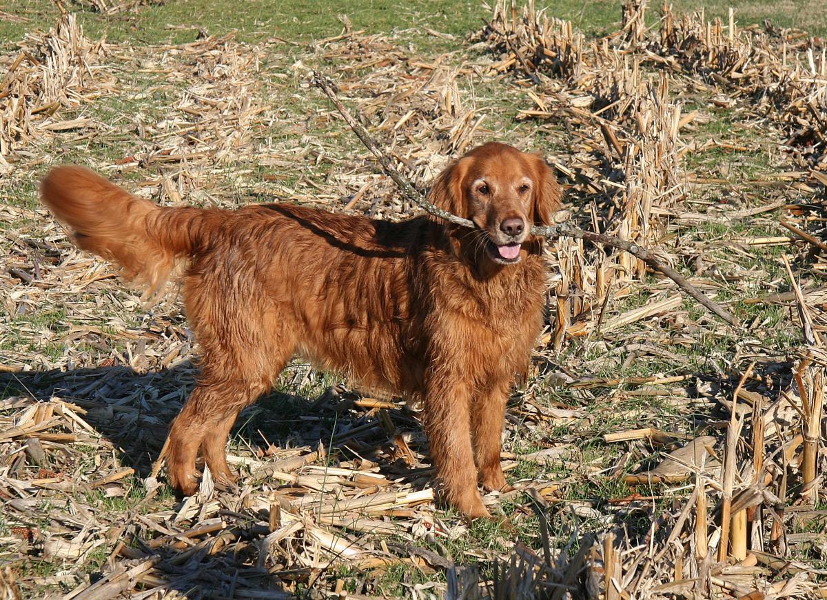 dog fetching