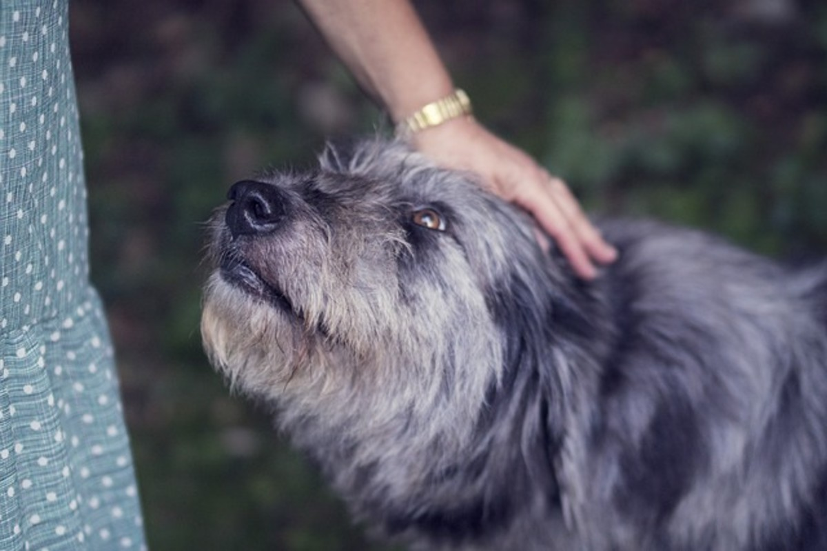 Nose prodding in dogs can quickly reinforce if dogs are given attention right afterward