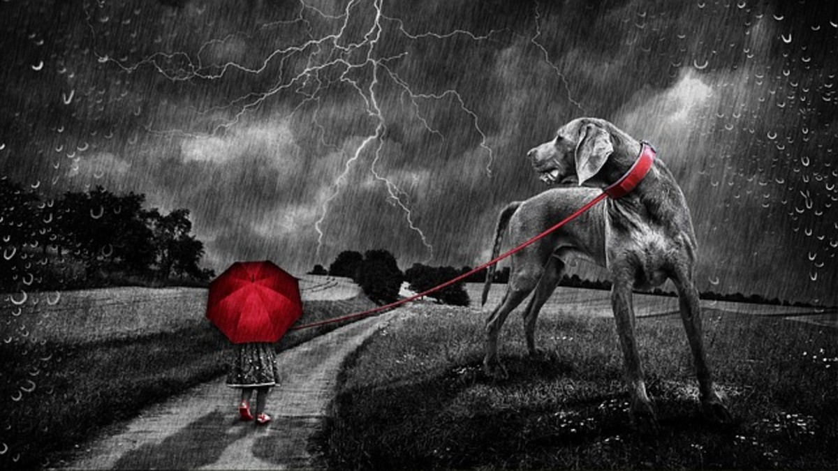 Dogs may be capable of also smelling the ozone from lightning strikes