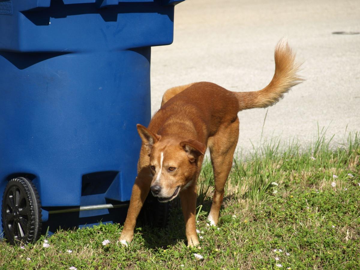 Dog marking trash can