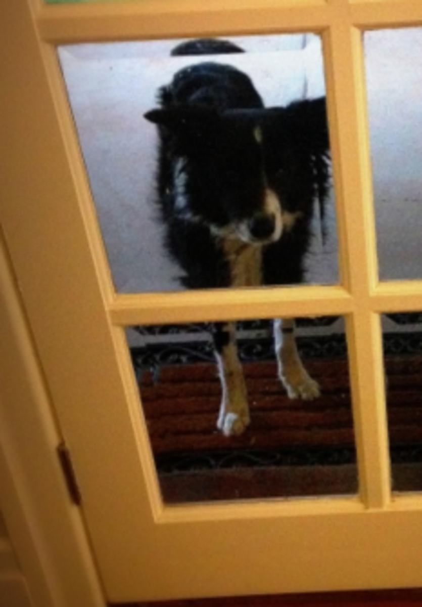 Dog Anxiety Digging By The Door