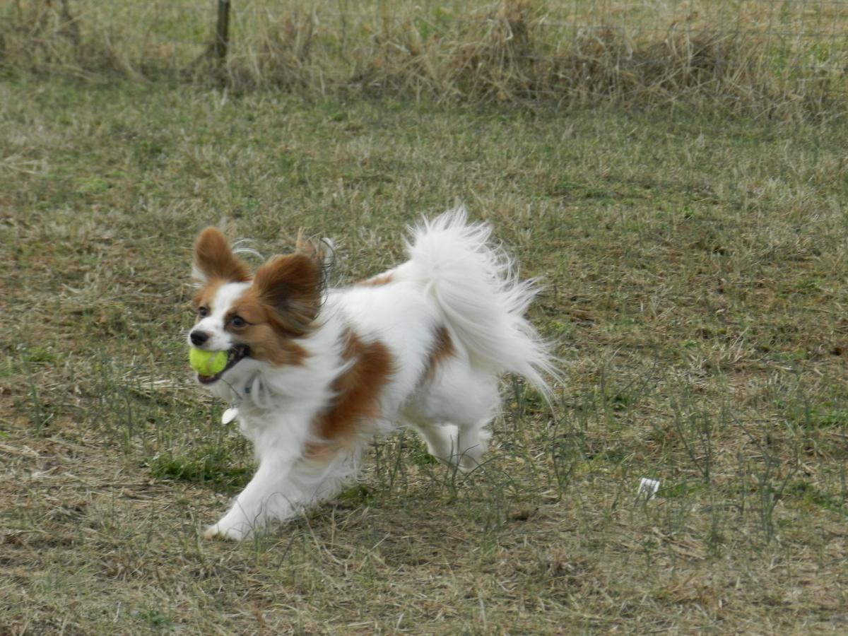 dog brings ball away when fetching
