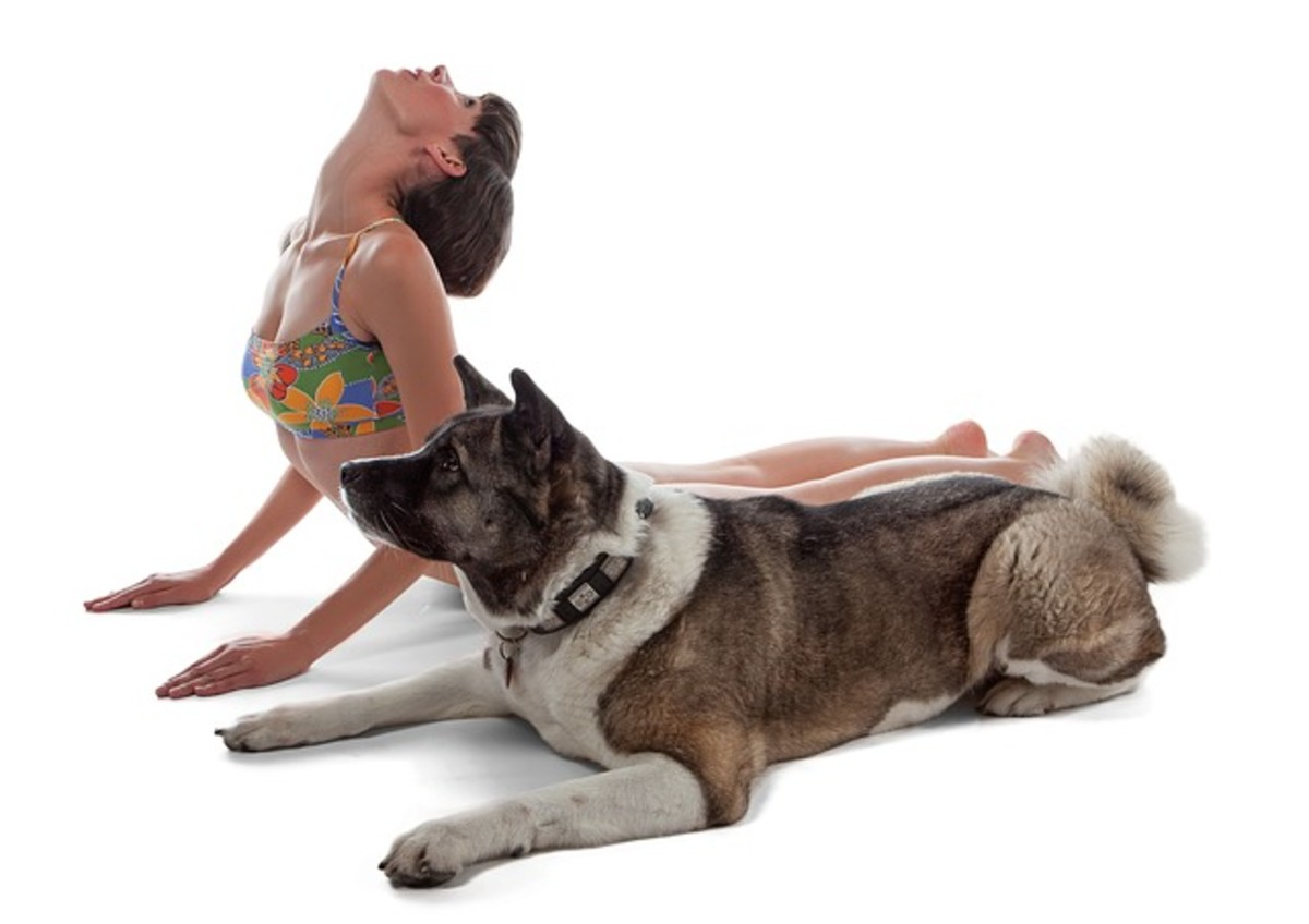 """""""Doga"""" is the new discipline that combines dogs with yoga"""