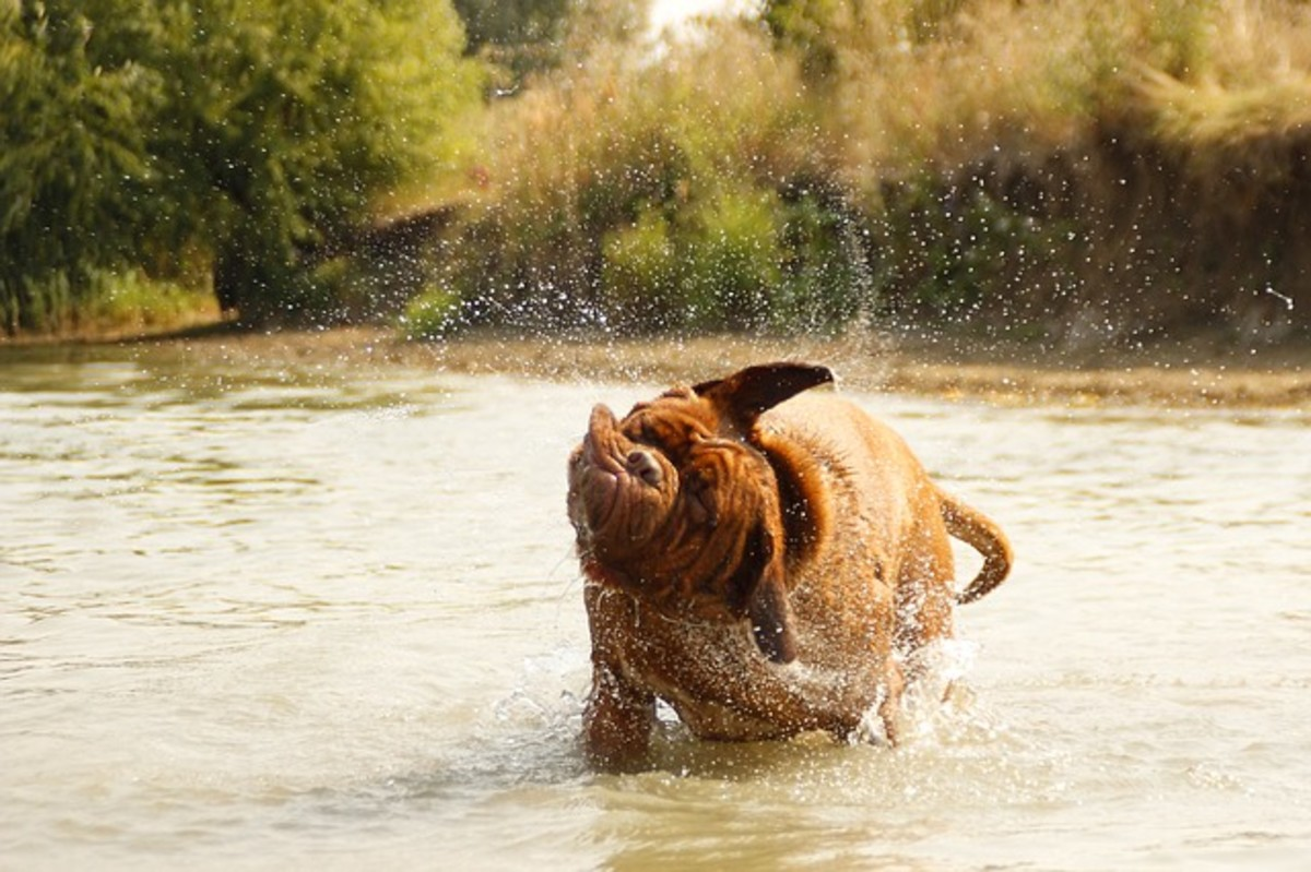 A dog shaking his fur is following his instincts, just as a mom would tell a child to take off wet clothing.