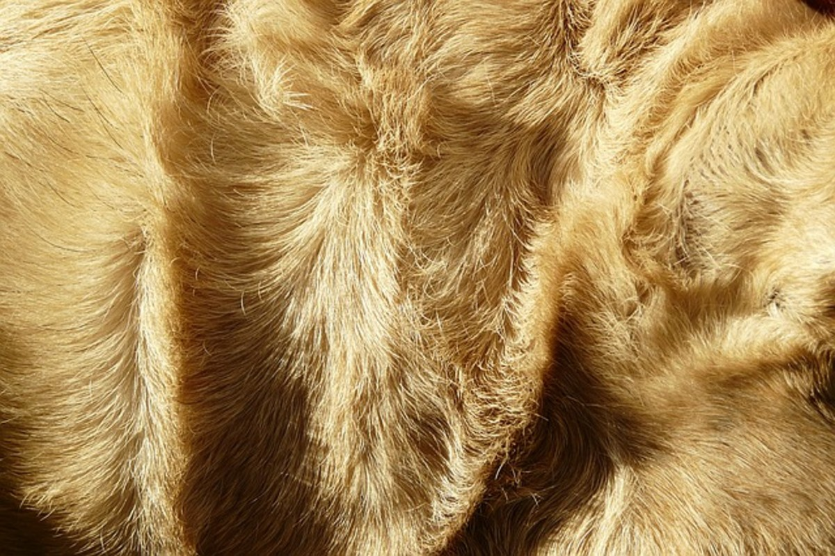 Dog hairs come in a variety of lengths and textures