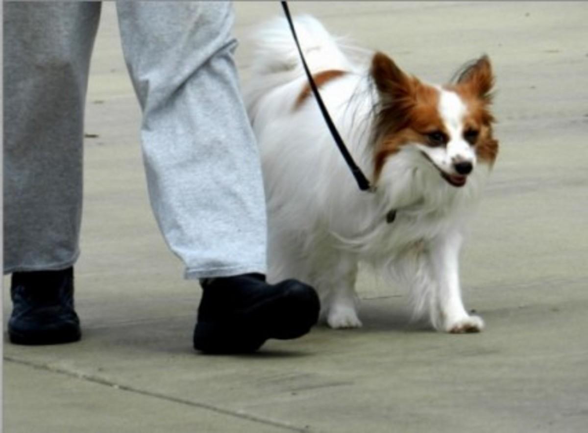 Train poite loose-leash walking.