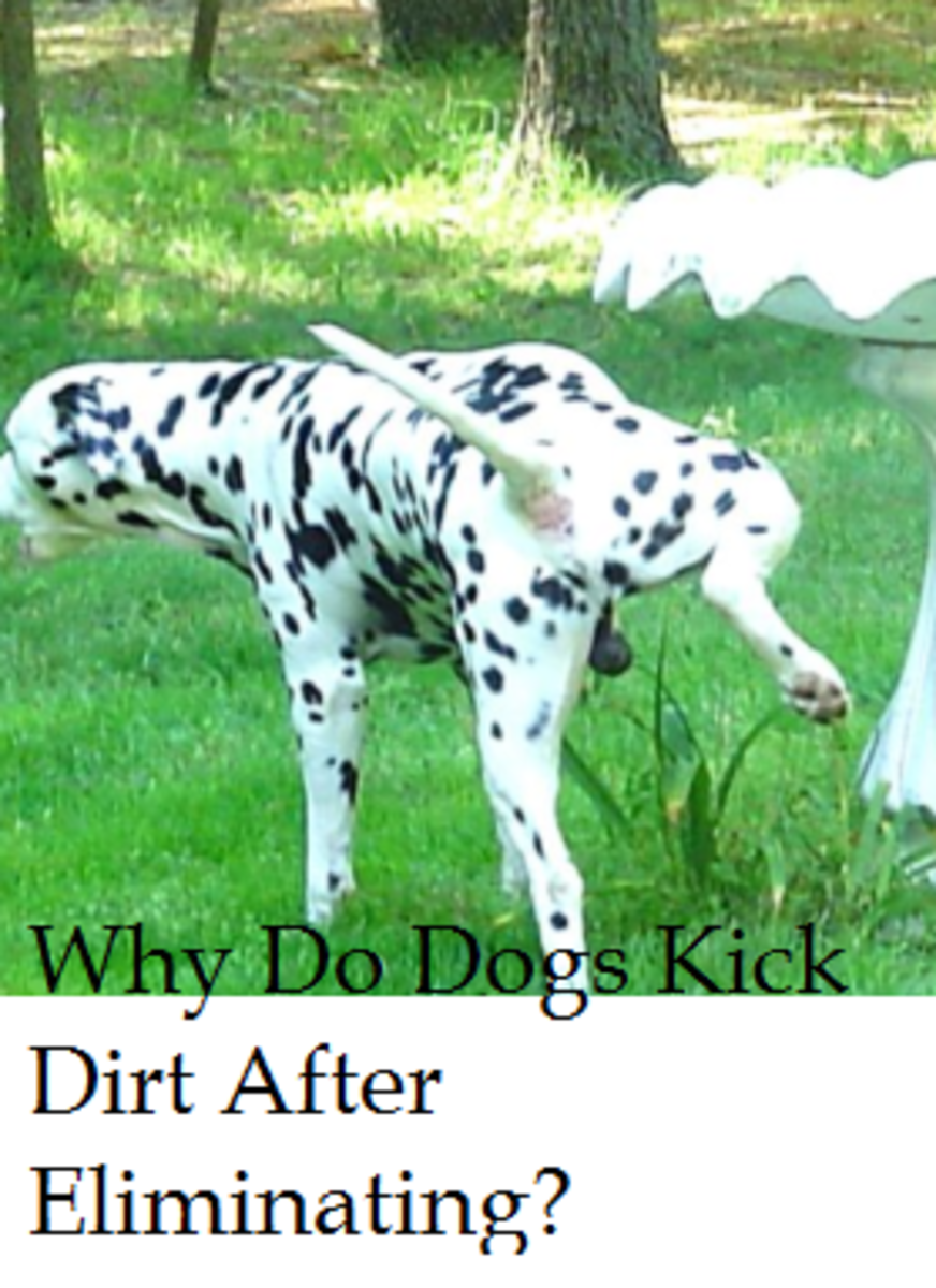 dog kicks dirt after peeing or pooping