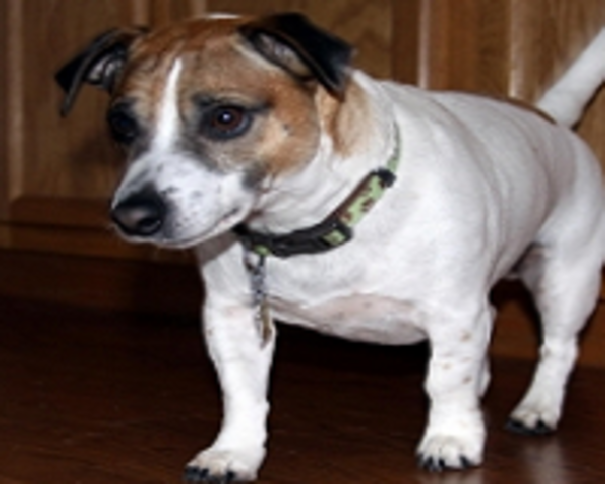 Why Do Dogs Slip on Hardwood Floors?