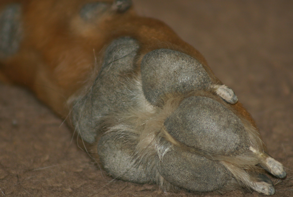 dog corn chip feet - Daily Dog Discoveries