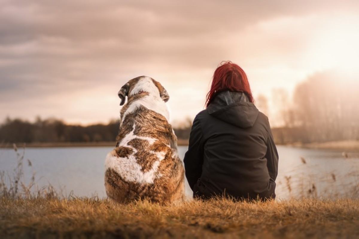 Why do dogs hear better than humans?