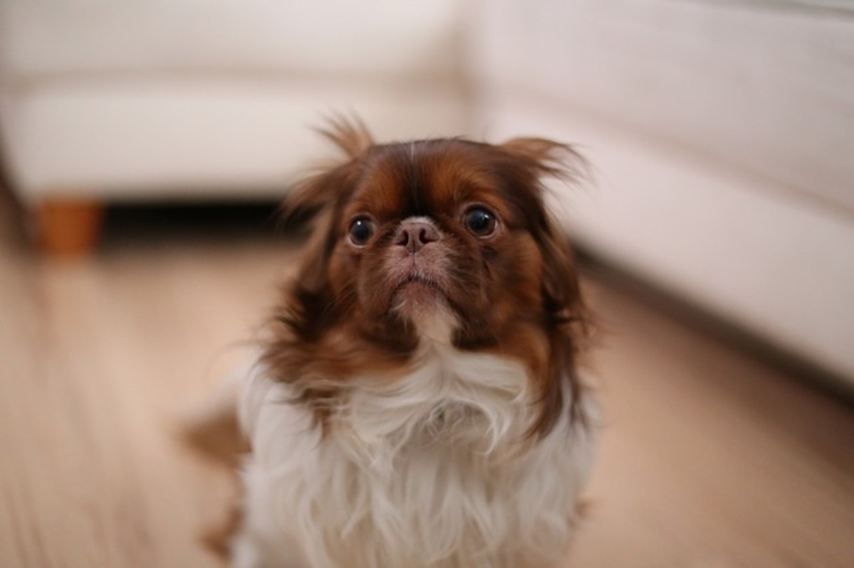 Emotions such as fear or surprise are known to cause dilated pupils in dogs