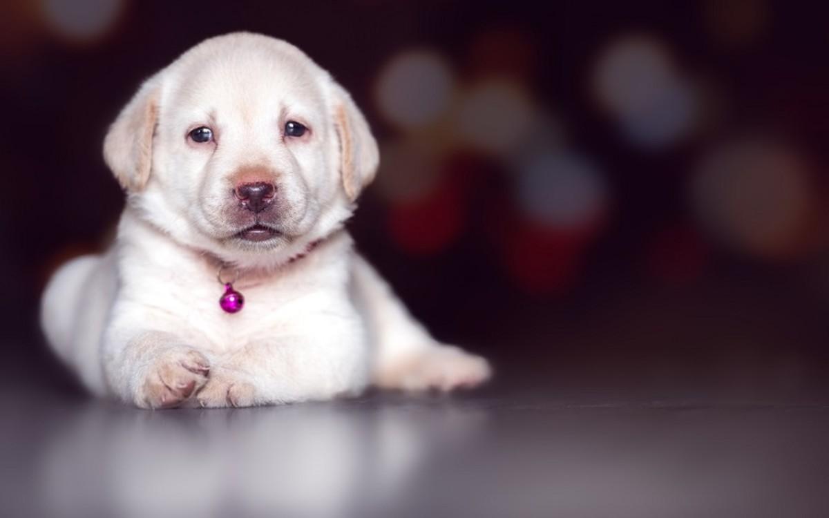 Dogs with Elevated Alkaline Phosphatase