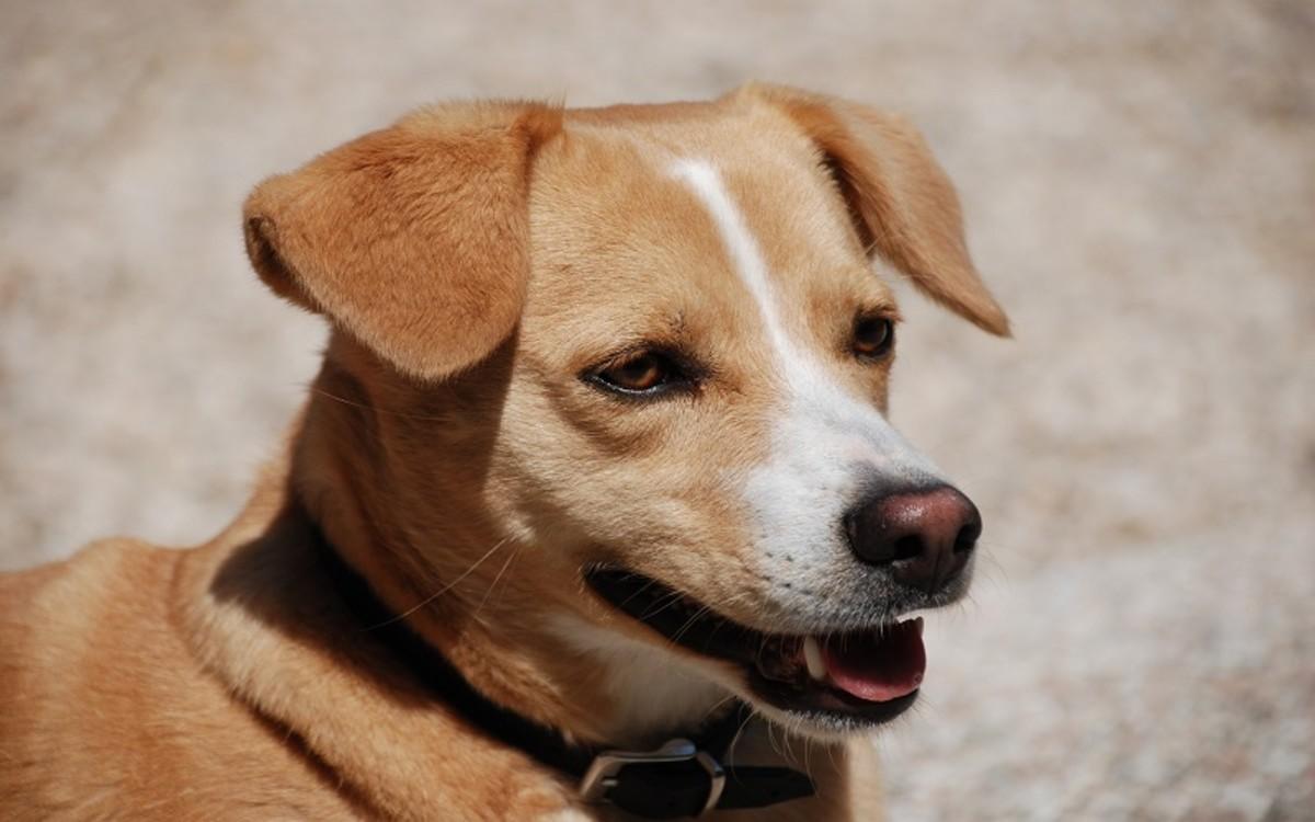 Dog's Teeth Are Worn Down