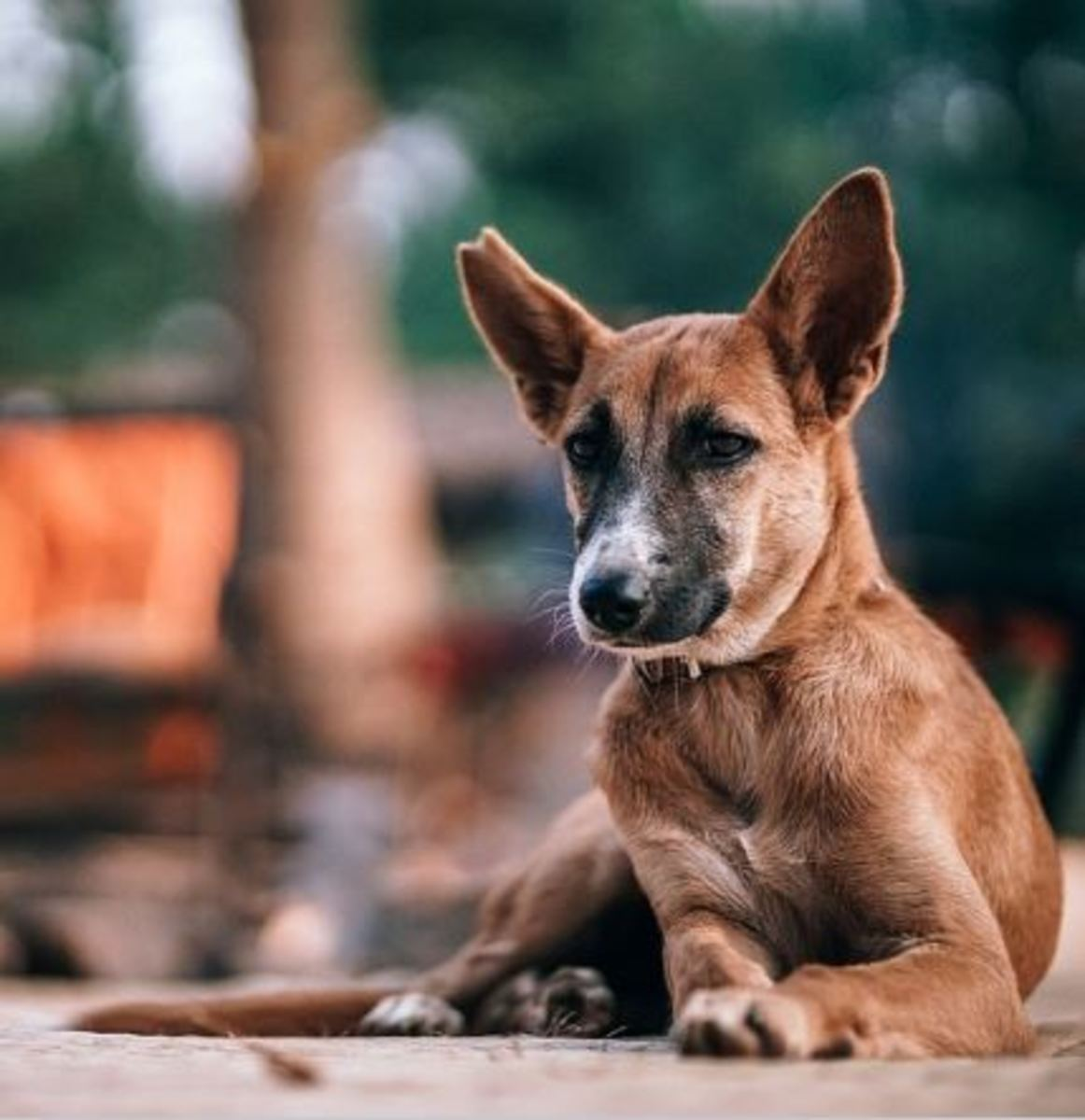 Elbow calluses are common in dogs lying down on hard surfaces.