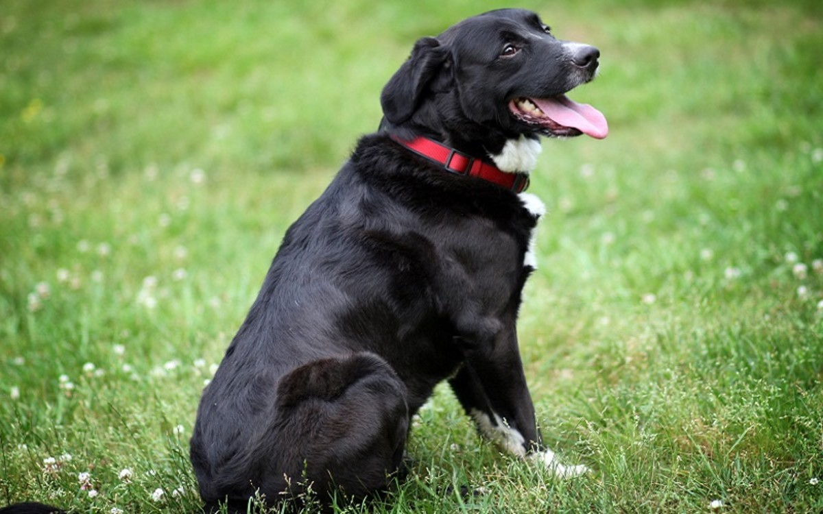 Phenylpropanolamine Side Effects in Dogs