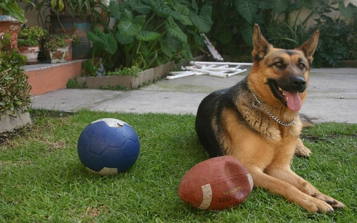 dog resource guarding