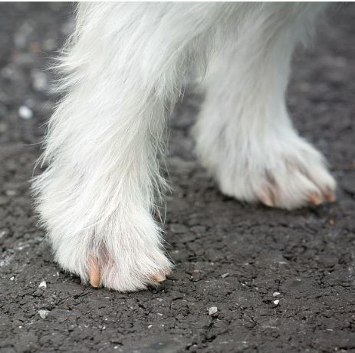 dog leg swelling