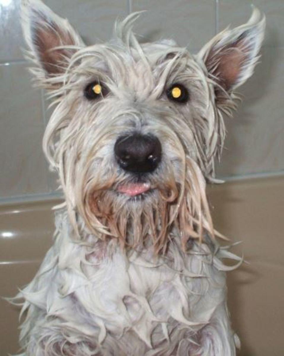 How often should you bathe a dog?