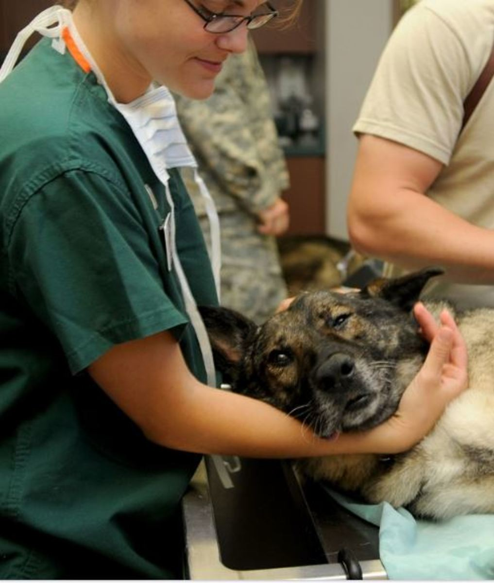 life expectancy of addison disease in dogs