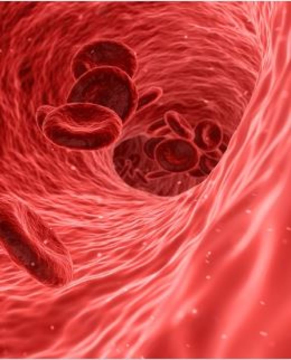 Erythropoiesis in dogs