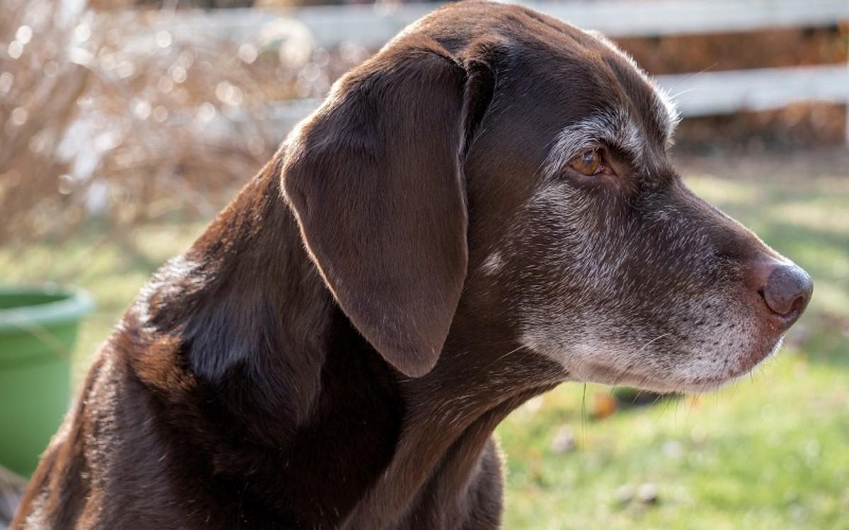 Feeding Tubes for Dogs