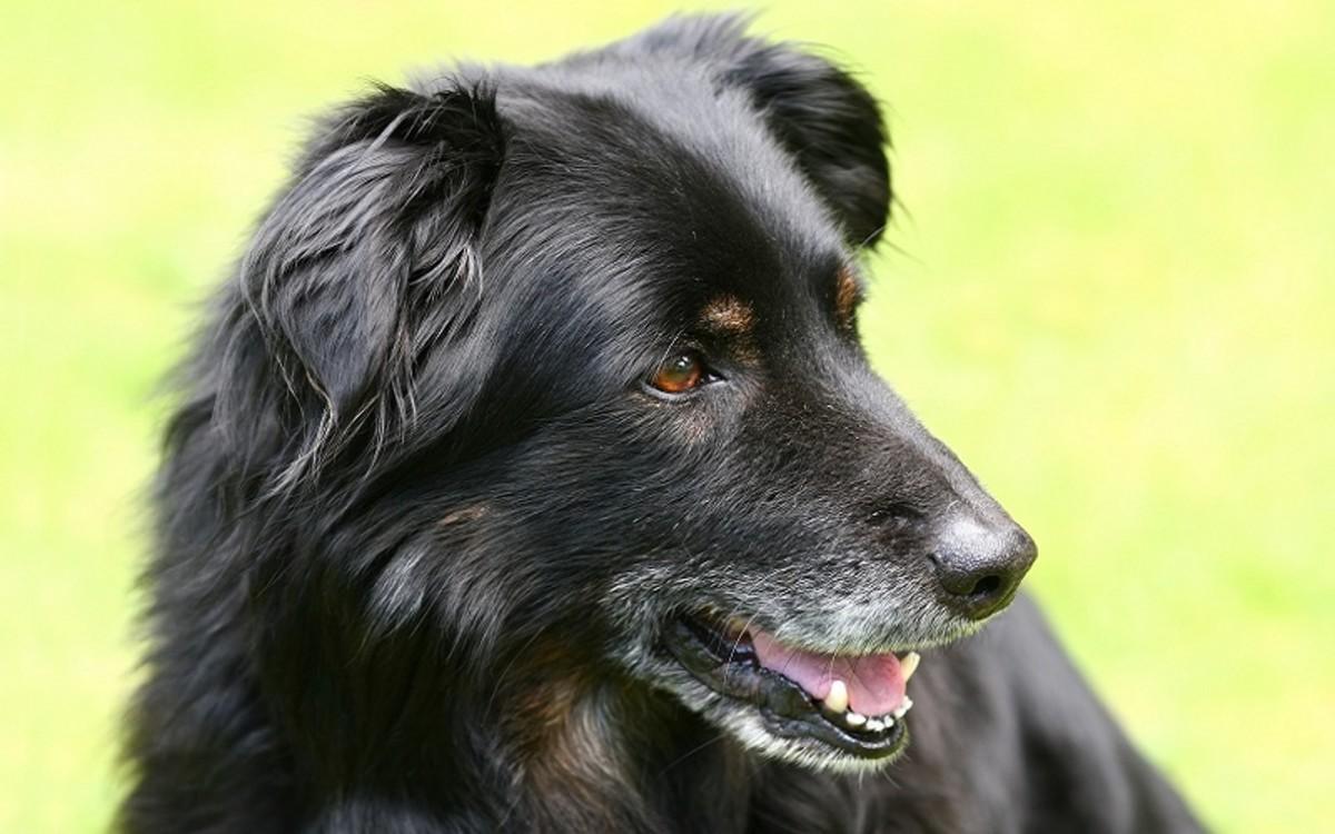 Types of Canine Lymphoma