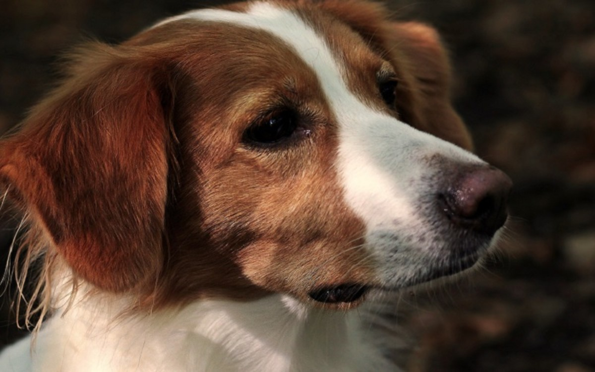 Dog's Leg Muscle Spasms