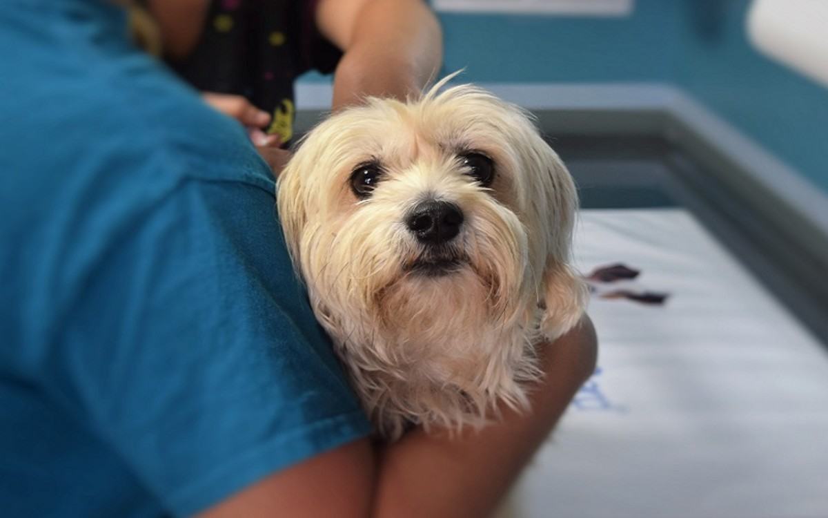dog-vaccine-side-effects