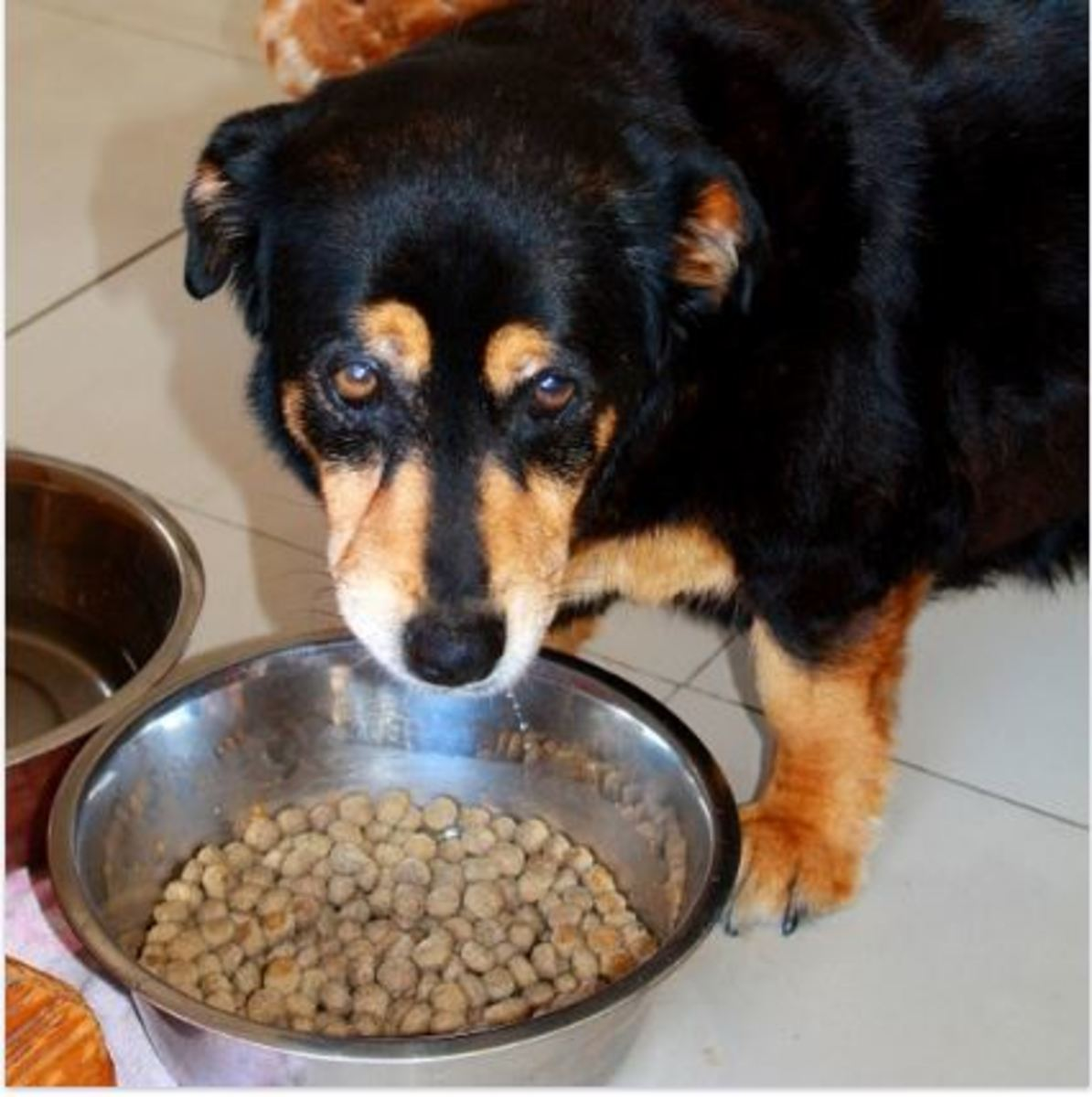 Dog with stomach cancer not eating