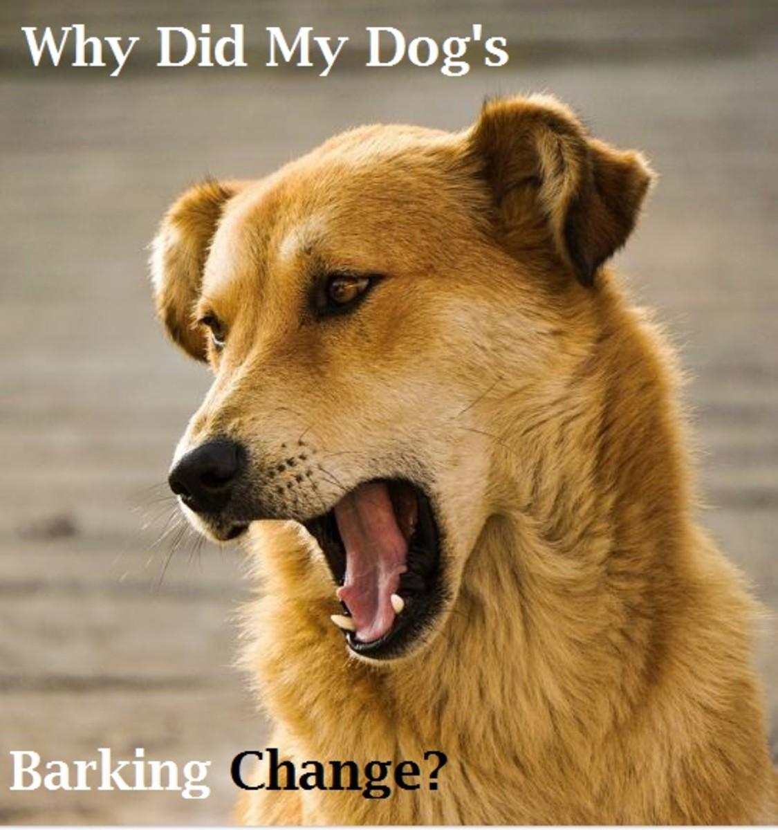dog barking voice change