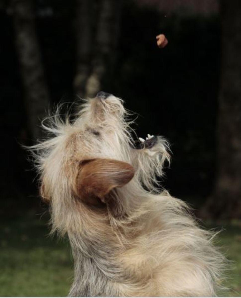 B12 Deficiency in Dogs