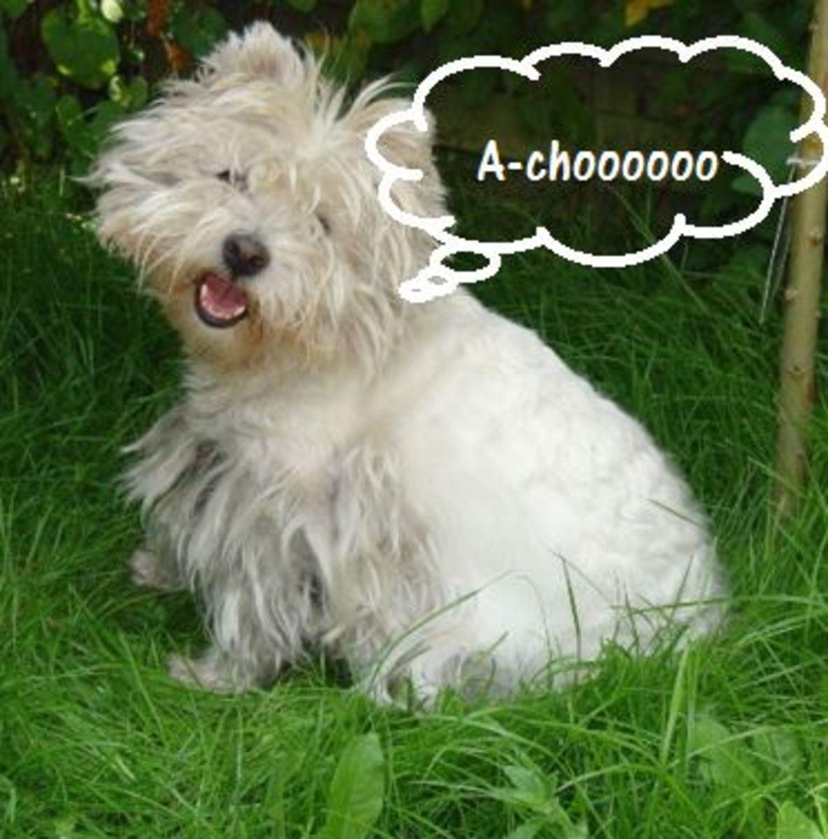 dog sneeze
