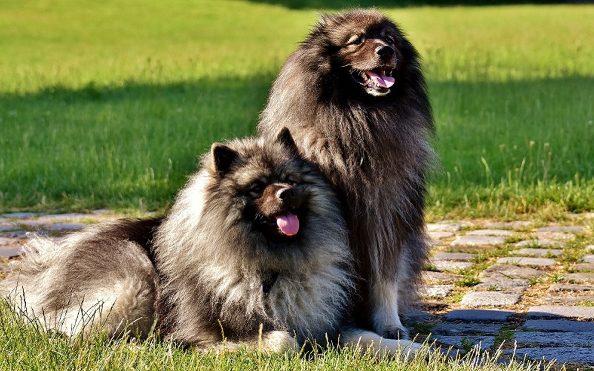 Grooming Different Dog Coat Types