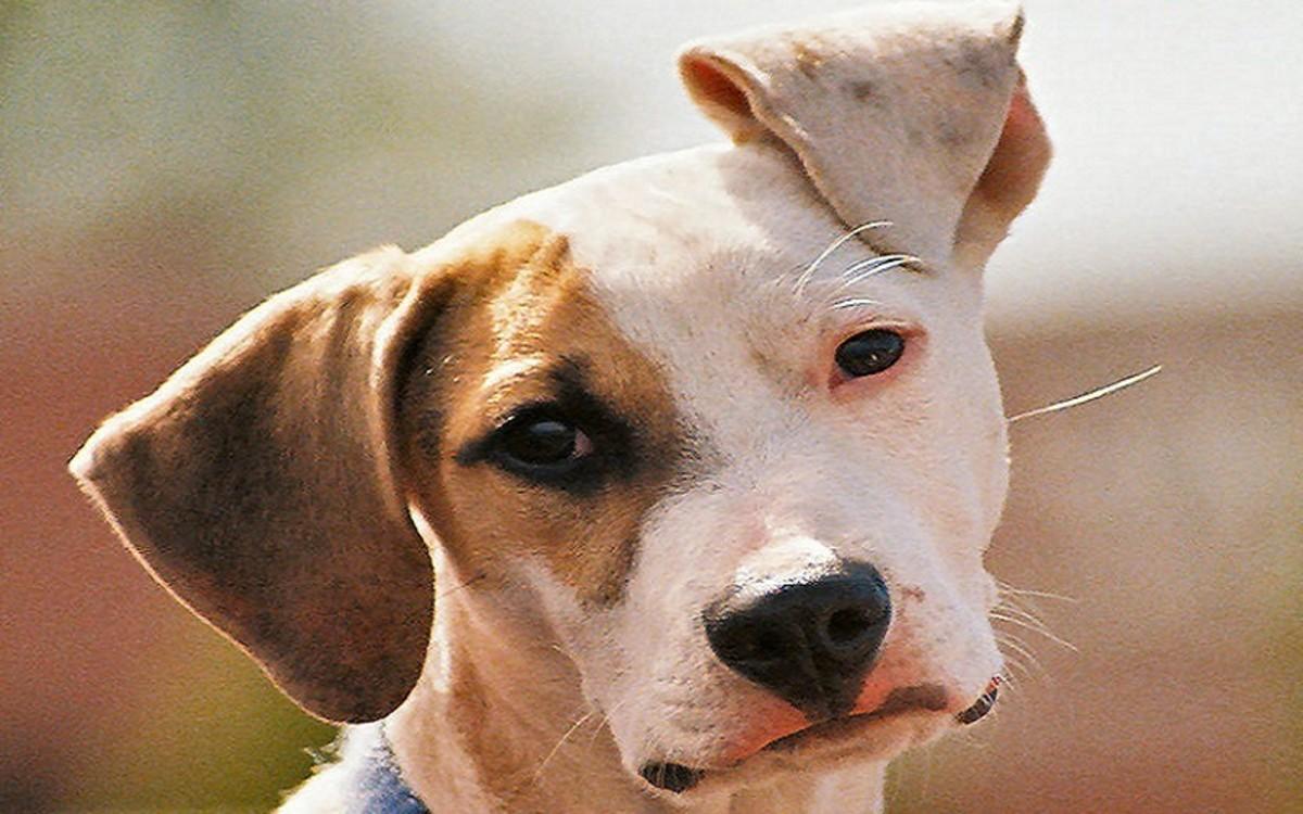 Dog Neck Surgery