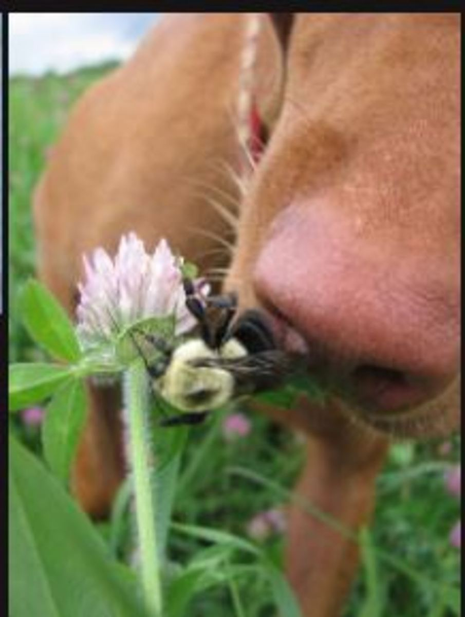 dog-bee-bite