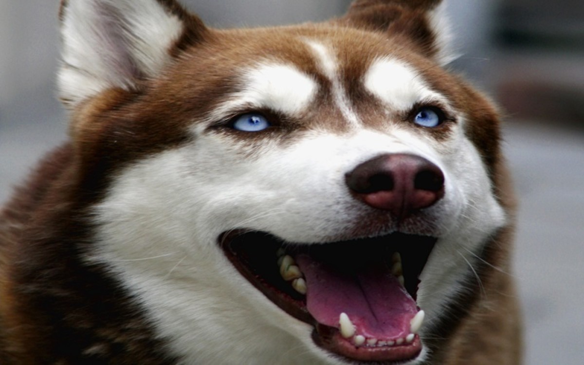 Mouth Cancers in Dogs