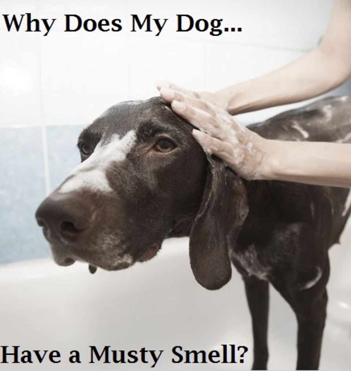 dog musty smell
