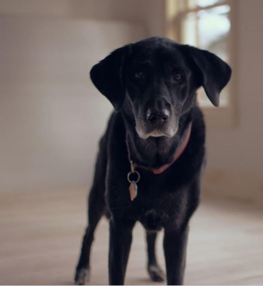 dog hind limb