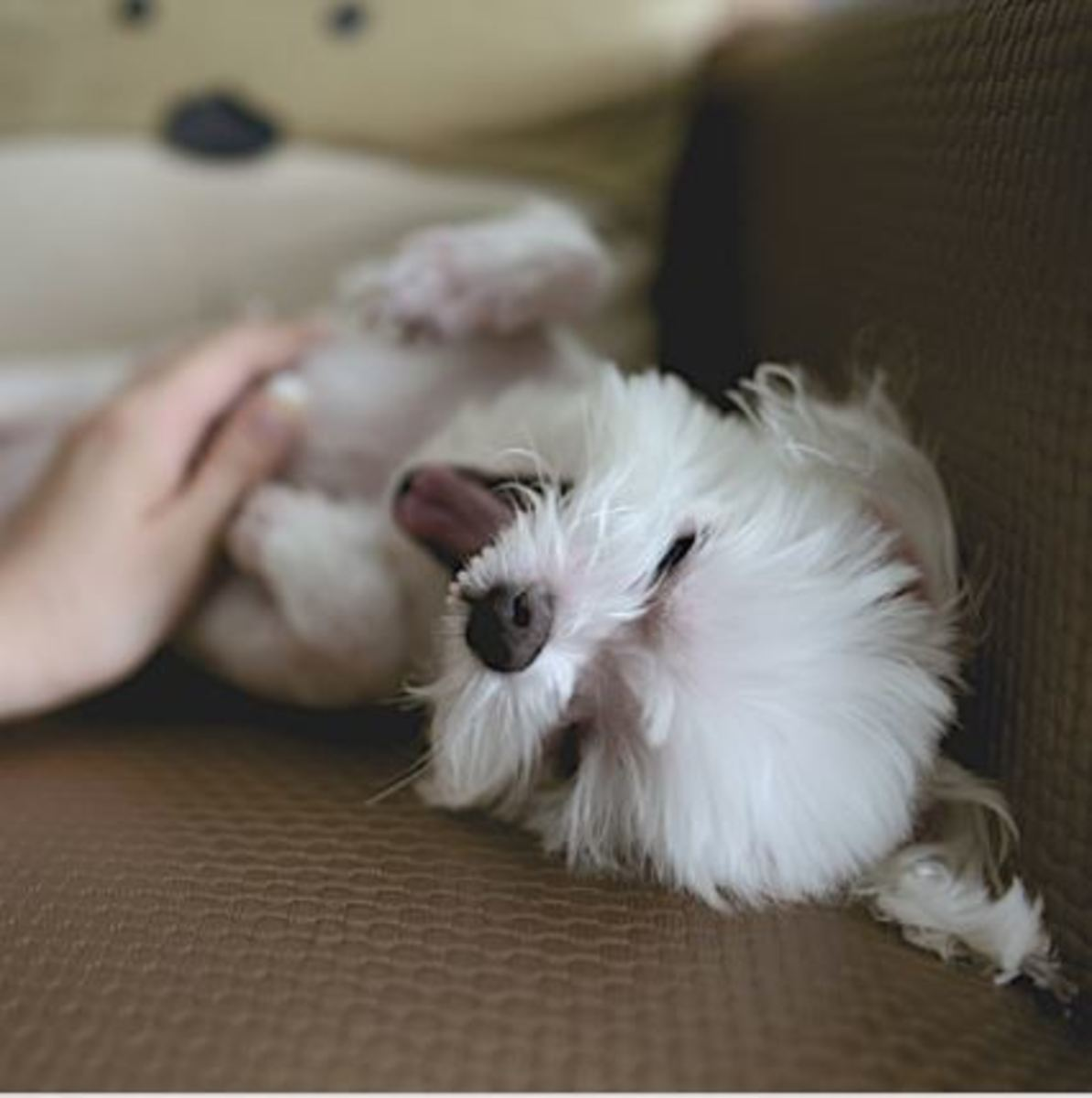 What causes black skin on a dog's belly?