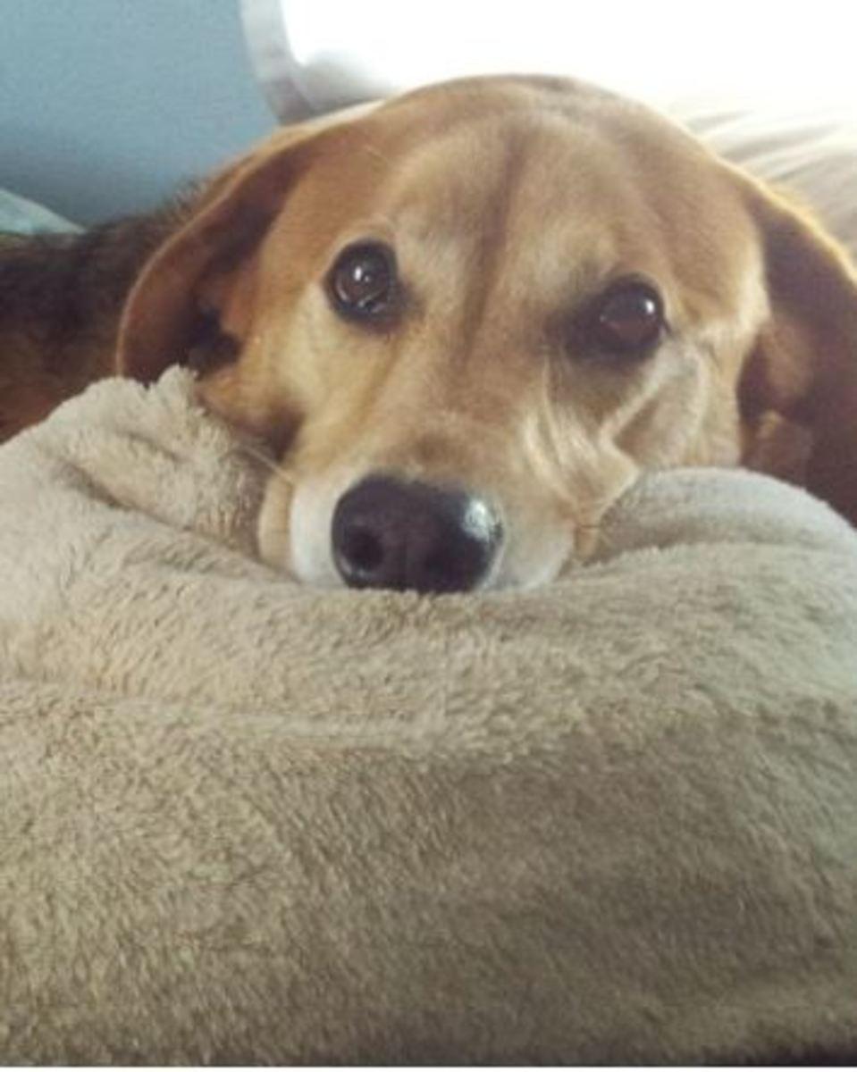 Fluconazole side effects in dogs