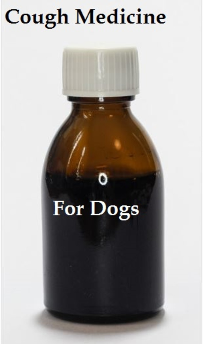 A List Of Medicines For Dog Cough