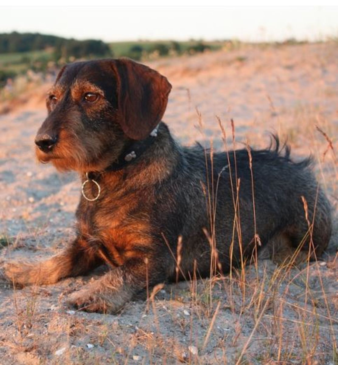 Essential Oil for Dog Upset Stomach